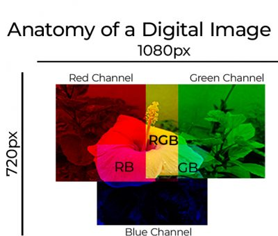 Anatomy of a digital image basic concept
